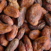 Cocoa Beans Suppliers, Manufacturers, Wholesalers and Traders