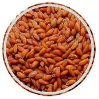 Garden Cress Seed By Al Hamd Herpes Land Co Supplier From Egypt