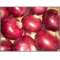 Onion : Manufacturers, Suppliers, Wholesalers and Exporters