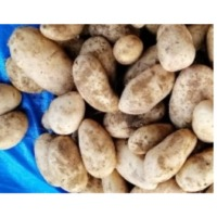 Desert Potatoes