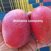 Egyptian Fresh Mango With High Quality
