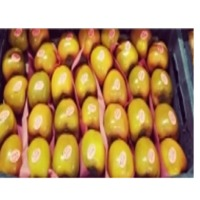 Fresh Persimmon With High Quality