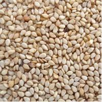 Sortex Clean Natural 99.90% Sesame Seeds