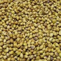 Coriander Seeds Eagle