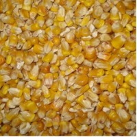 Yellow Corn Fodder