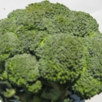 Natural Broccoli Extract
