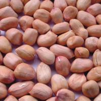Raw Peanuts Kernel