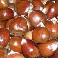 Organic Fresh And Dried Chestnut