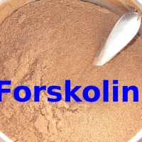 Natural And Organic Forskolin Powder