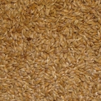Canary Seeds For Animal & Birdfeed