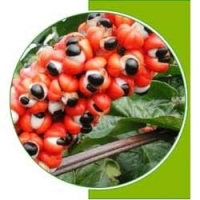 Natural Guarana Seed Extract