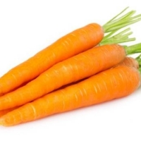 Indian Fresh Carrot