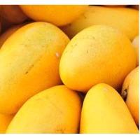 Indian Mangoes