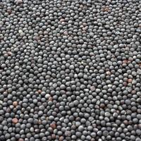 Rapeseeds & Canola Seeds