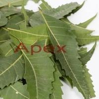 Azardiractha Indica Leaves
