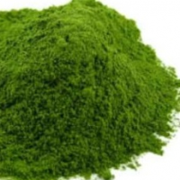 Organic Coriander Leaves Powder (Dehydrated)