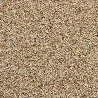 Teff Grain Ivory