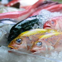 UAE Fish Suppliers, Manufacturers, Wholesalers and Traders