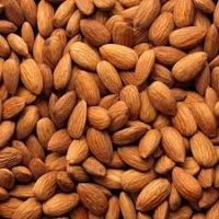 UAE Almonds Suppliers, Manufacturers, Wholesalers and Traders