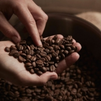 UAE Coffee Beans Suppliers, Manufacturers, Wholesalers and Traders
