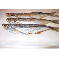 Dried Ziege Fish
