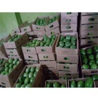 Jumbo Avocados