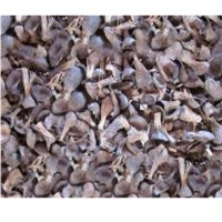 Palm kernel