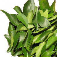 Dried And Fresh Curry Leaves