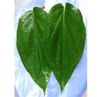 Fresh Khari Leaves