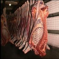 Halal Frozen Beef Parts.