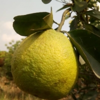 Organic and Natural Orange