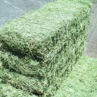 Alfafa Hay For Animals Feeding
