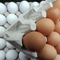 Fresh Chicken Table Eggs Brown And White Shell