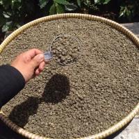 Pure Wild Kopi Luwak Arabica Coffee Green Bean