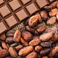 Cocoa Beans - Best Quality Cocoa