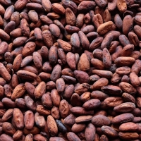 Cocoa Beans - Best Quality