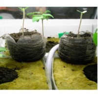 Coco Peat Seedling Cubes