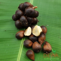 Snake Fruit (Salacca)