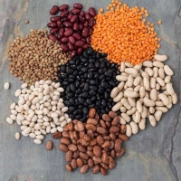 Vigna Beans, Organic Beans Wholesale