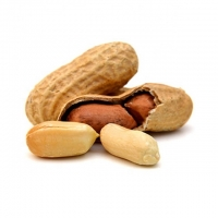 Organic Raw Peanuts With Shell / Without Shell