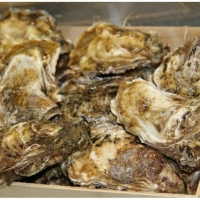 High Quality Frozen Oilfish