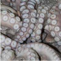 Frozen & Fresh Octopus
