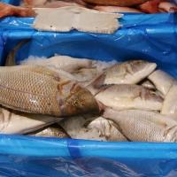 Seafood Frozen Captain Fish