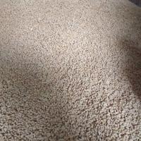 W240 Cashew Nut