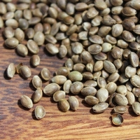 Natural Hemp Seed