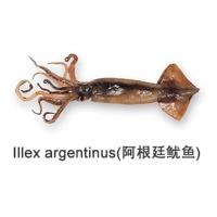 Illex Argentinus