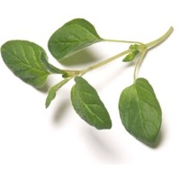 Oregano Oleoresin