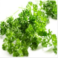 Parsley Oleoresin