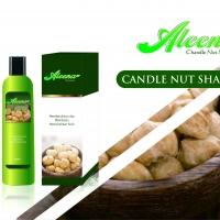 Candle Nut Shampoo