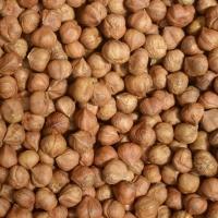 Good Quality Natural Raw Hazelnut